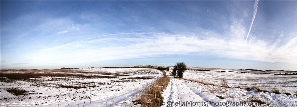 Wintery Scene Panorama